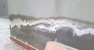 املاح الجدران